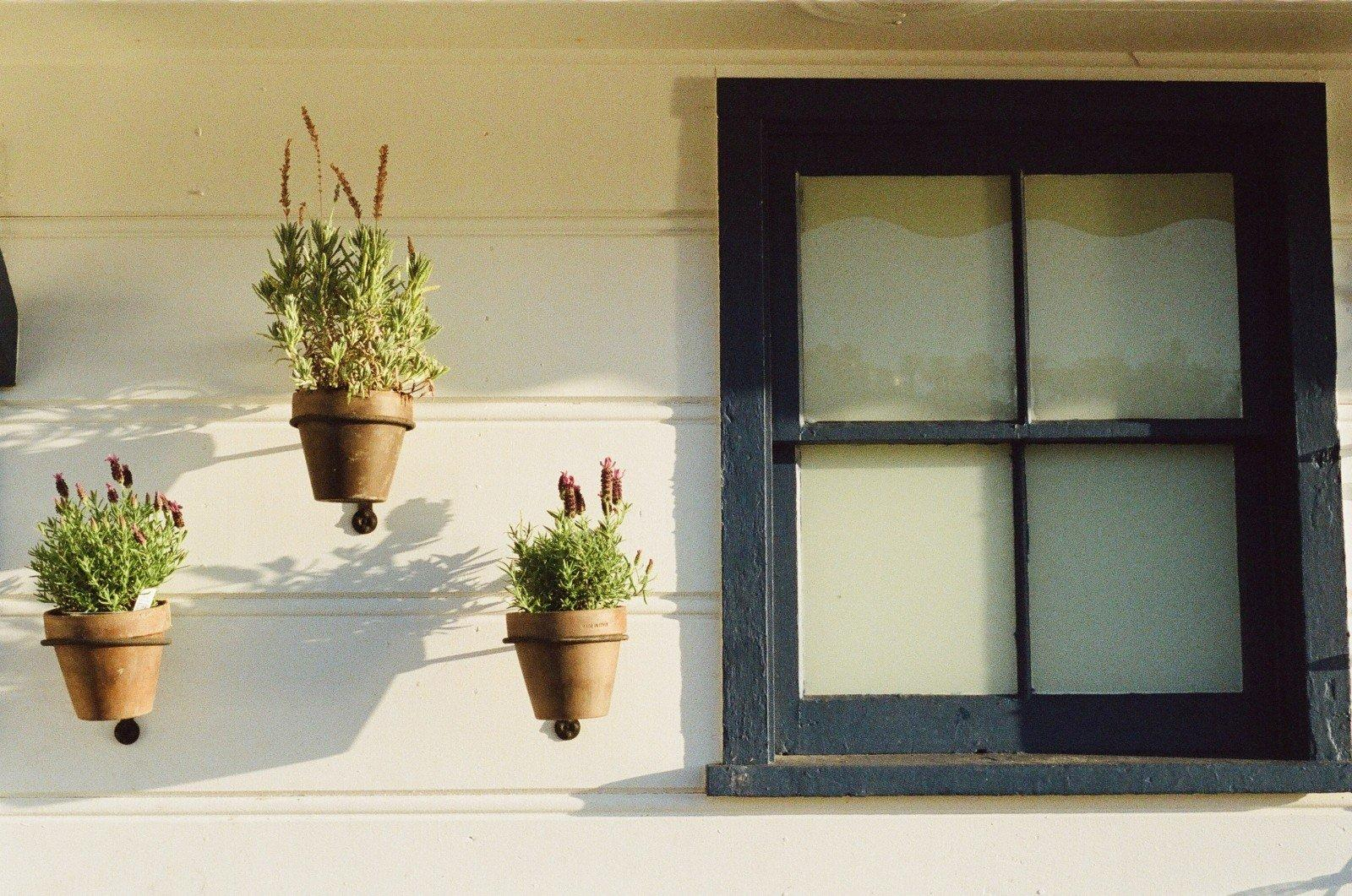 flower pots and window