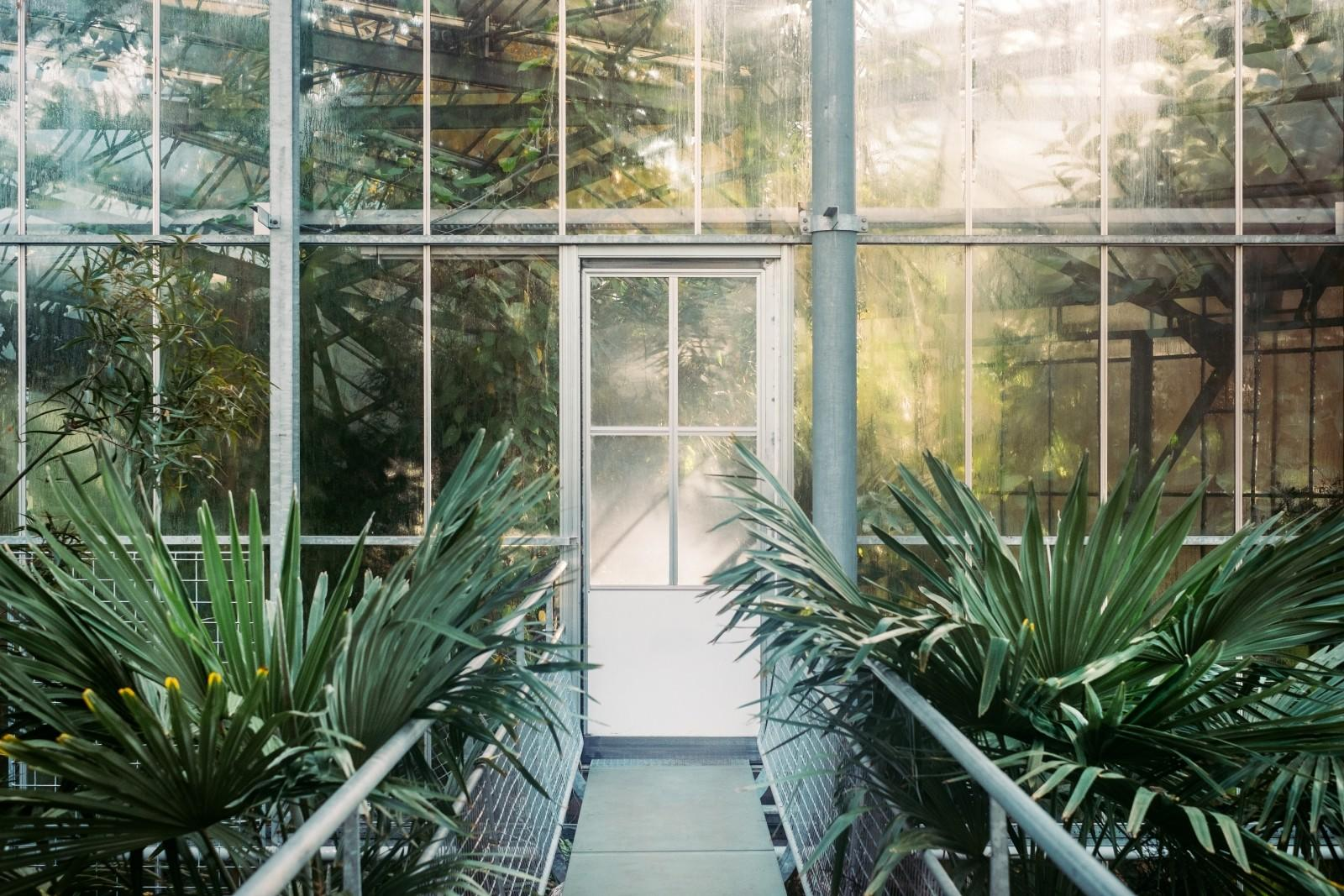 glasshouse conservatory greenhouse